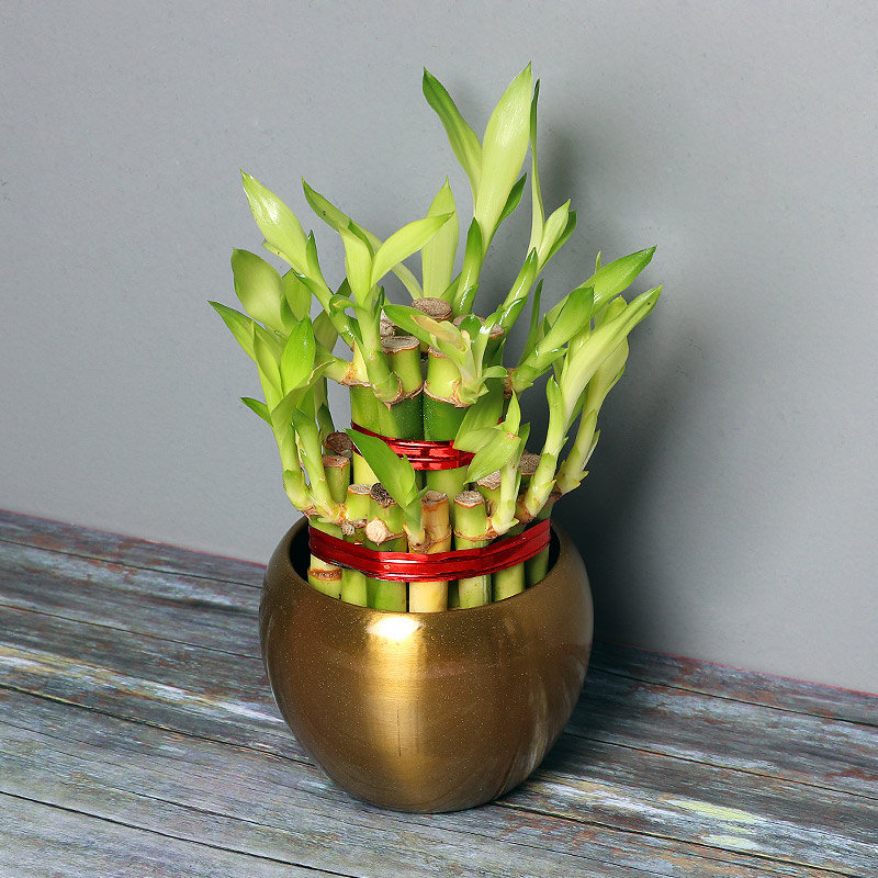 2 Layer Bamboo Plant in a Vase