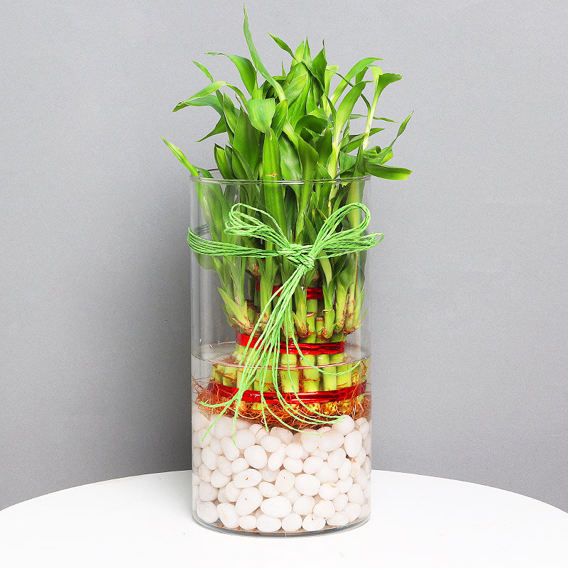 Send 3 Layer Lucky Bamboo Terrarium Plant Online Price Rs