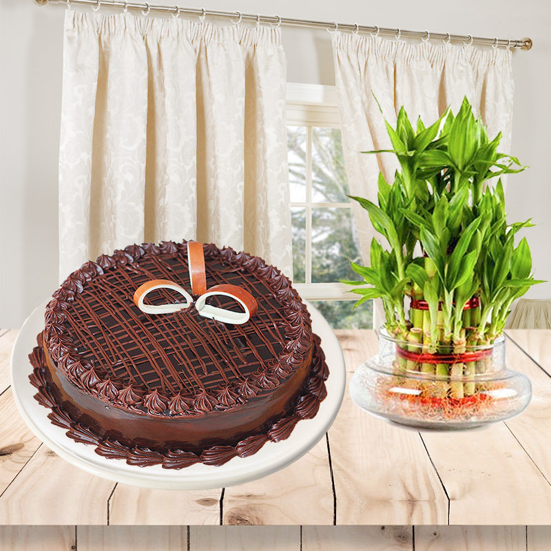 Affectionate Greetings - A combo of half kg chocolate cake and 2 layer lucky bamboo