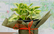 Mothers Day Plant Gifts