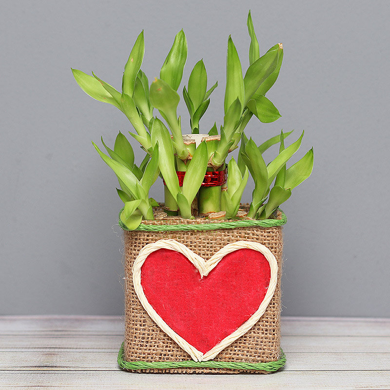 Two Layer Bamboo in Jute Packing with Printed Heart