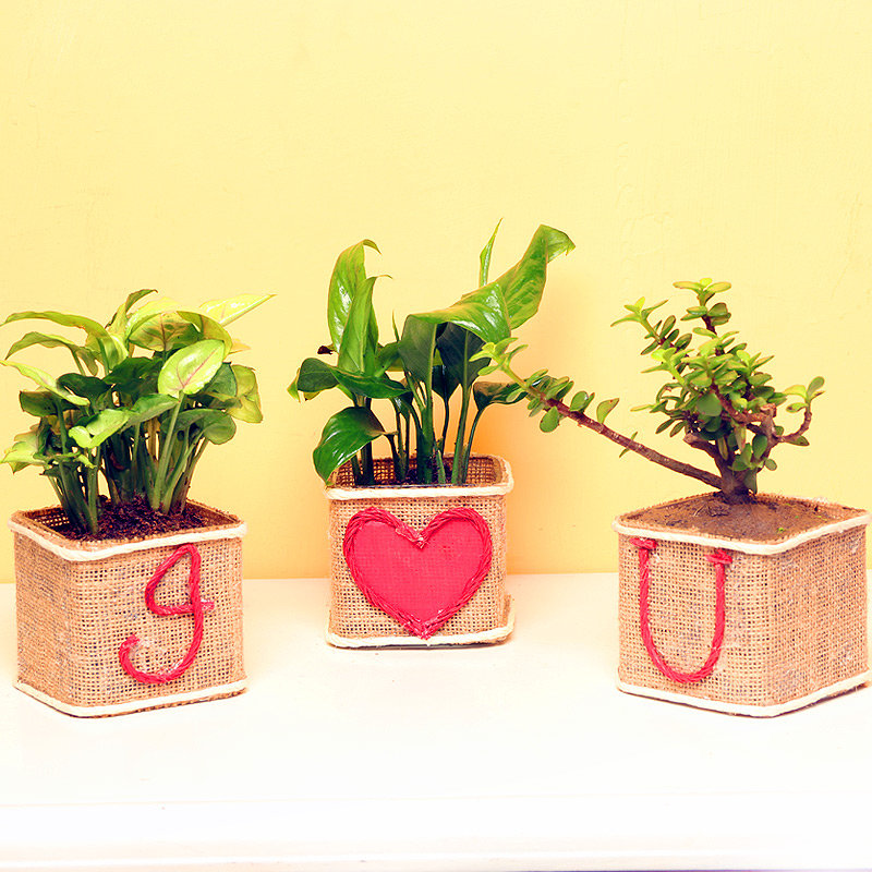 Foliage Plants Combo for Love