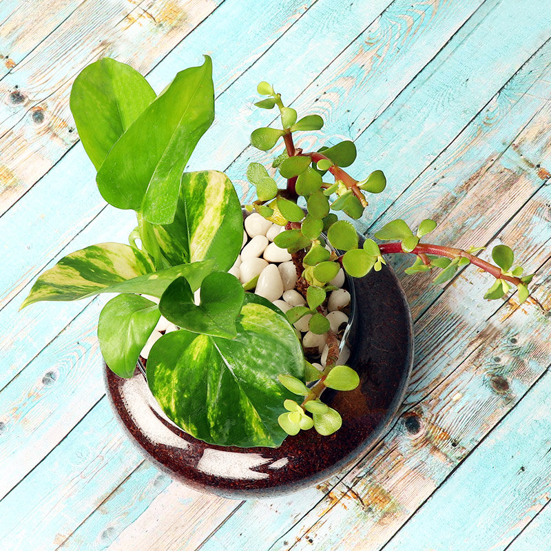 Money and Jade Plant in a Glass Vase