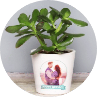 Personalised Plants