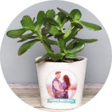 Plant with Personalised Pot