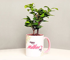 Mothers Day Plant