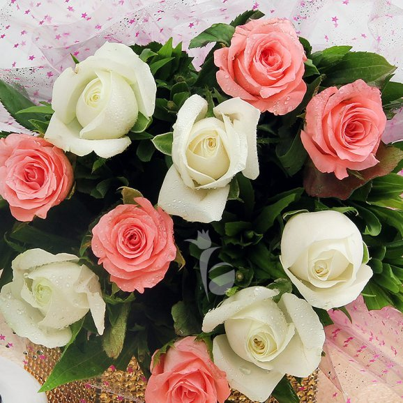 10 Pink and White Roses with Top View