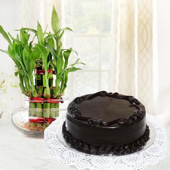 Combo of half kg chocolate cake and 2 layer lucky bamboo