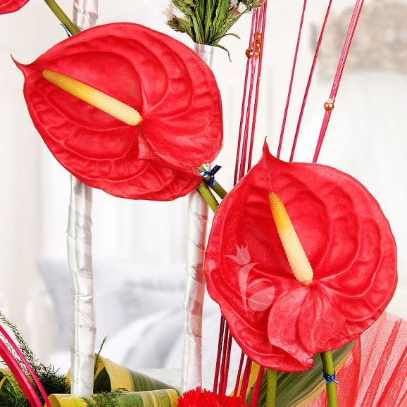 An arrangement of 13 Red Carnations along with 3 Red Anthuriums in Zoomed View