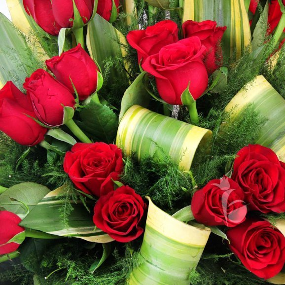 40 Red Roses Arrangement in Zoomed View