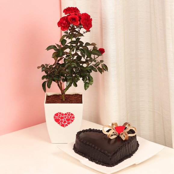Red Rose Love Plant with Truffle Cake