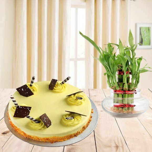 Aesthetic Appeal - A combo of Butterscotch cake and lucky bamboo plant combo