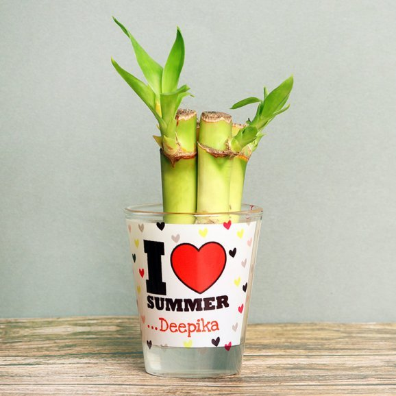 Bamboo Plant in Personalised Shot Glass