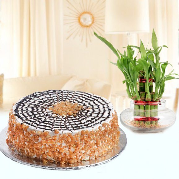 Caramelized Happiness - Combo of butterscotch cake and lucky bamboo plant