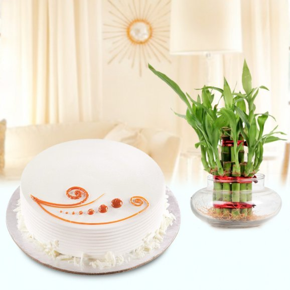 Creamy Delight Combo - A gift hamper of vanilla cake and lucky bamboo plant
