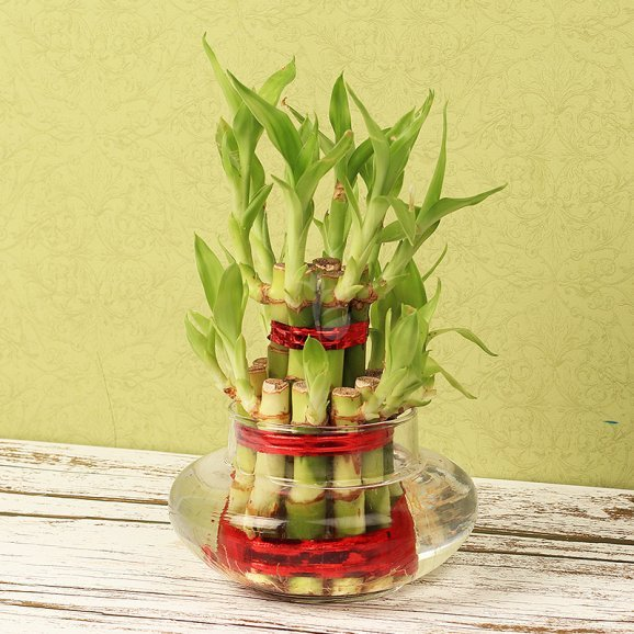 Double Layer Bamboo
