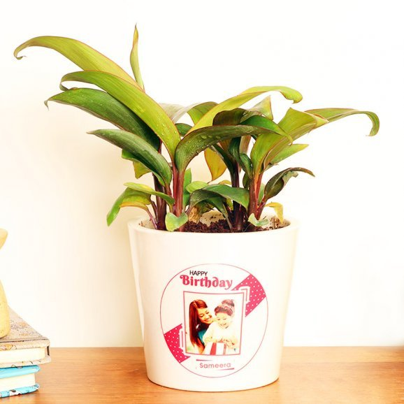 Dracena Plant in Personalised Birthday Vase