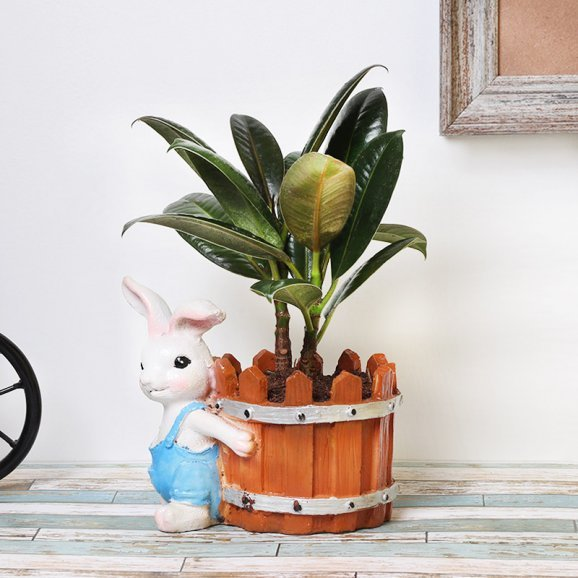 Dwarf Rubber Plant in Bunny Pot