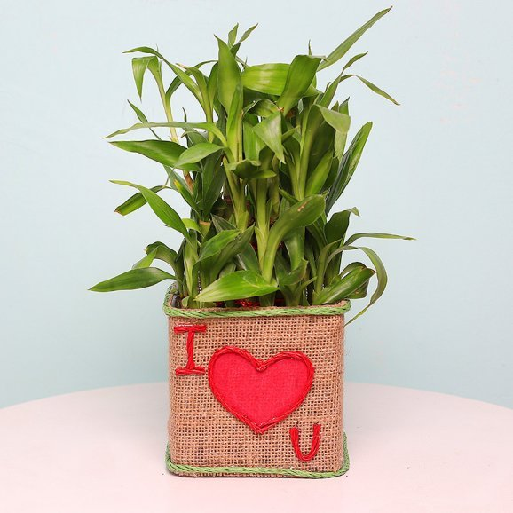 Two Layer Bamboo in Jute Packing with I Love You Printed in it