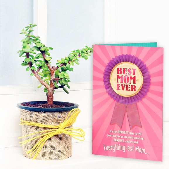 Jade Plant with a Card Combo for Mom