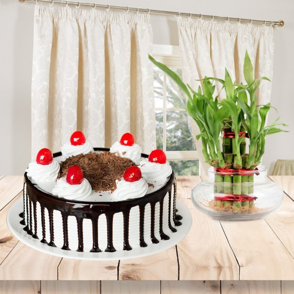 Evergreen Miracle - A combo of Black Forest cake and lucky bamboo plant