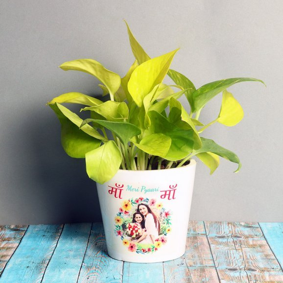 Money Plant in a Personalised Vase - A Plant Gift For Mother