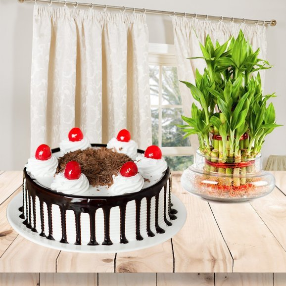 Expressions Of Endearment - Combo of half kg Blackforest cake and 2 tier lucky bamboo