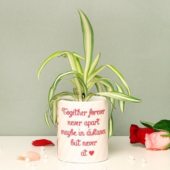 Spider Plant in Personalised Love Mug