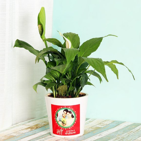 Peace Lily Plant in Personalised Vase for Mom