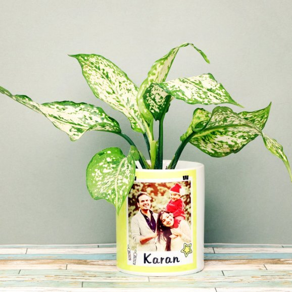 Aglaonema Plant in Personalised Birthday Mug