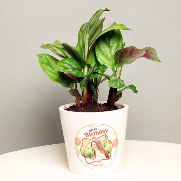 Calathea Plant in Personalised Birthday Vase