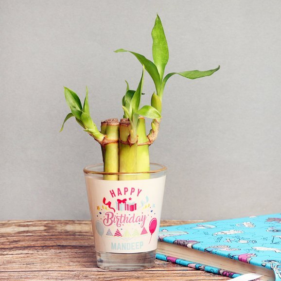 Lucky Bamboo in Personalised Birthday Shot Glass