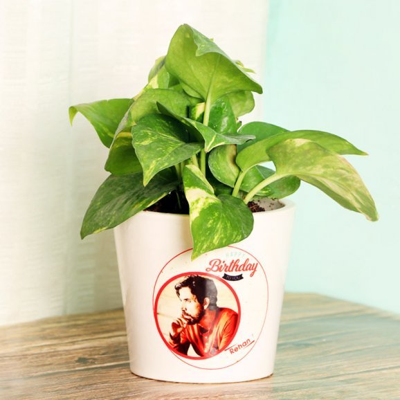 Green Money Plant in a Personalised Birthday Vase