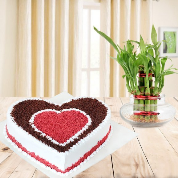 Heavenly Happiness Combo - Heart shaped choco red velvet cake with lucky bamboo plant