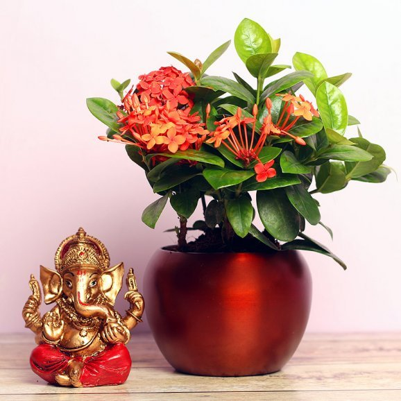 Ixora Plant and Ganesh idol Combo