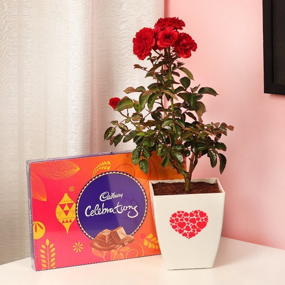 Red Rose Love Plant with Celebrations Pack Combo