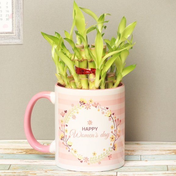 2 Layer Lucky Bamboo Womens Day Plant