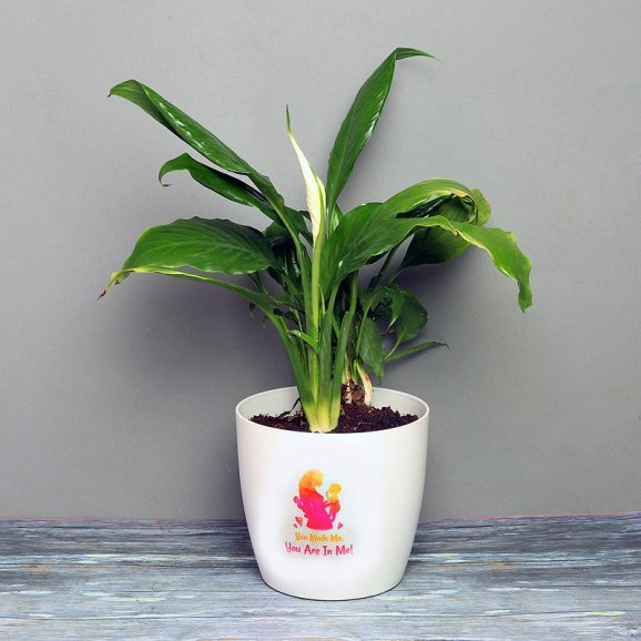 Peace Lily Plant in a White Vase for Mom