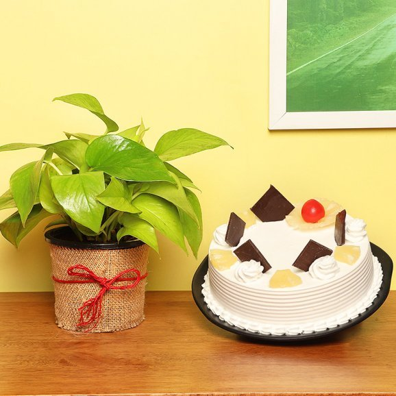 Money Plant with Pineapple Cake Combo