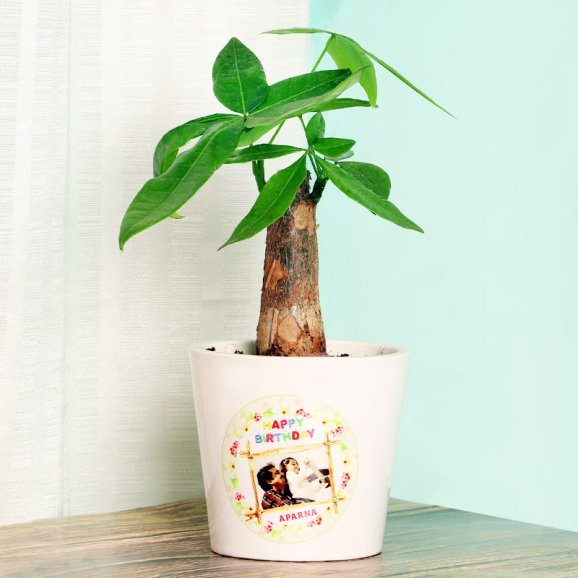 Money Tree Bonsai Plant in a Personalised Birthday Vase