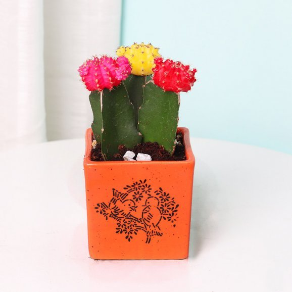 Moon Cactus in a Vase