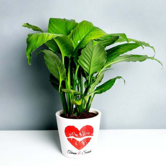 Personalised Love Peace Lily Plant