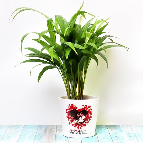 Personalised Areca Palm Plant for Birthday