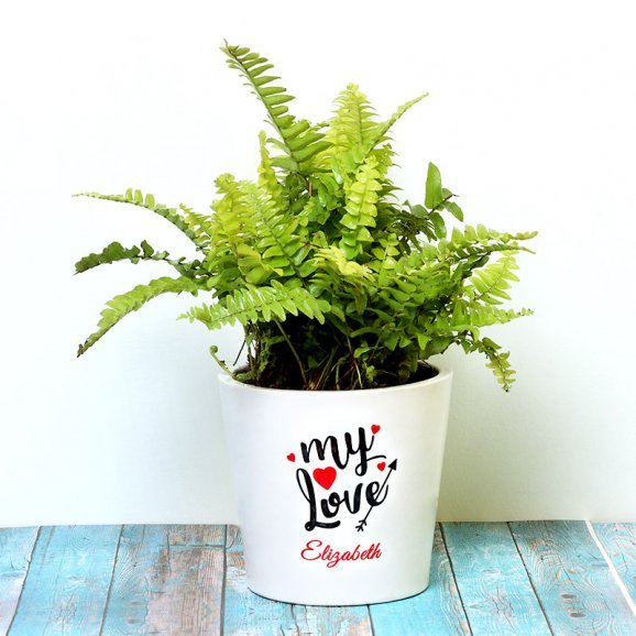 Personalised Love Fern Plant