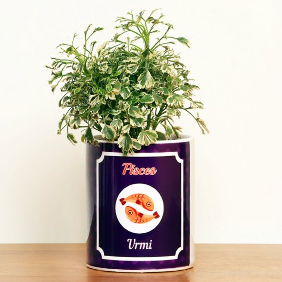 Personalised Aralia Plant for Pisces People