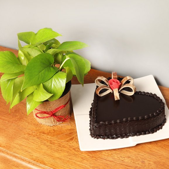 Money Plant with Heart Shaped Chocolate Cake Combo