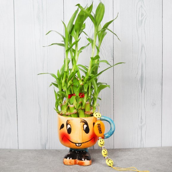 Lucky Bamboo and Friendship Band Gift Combo