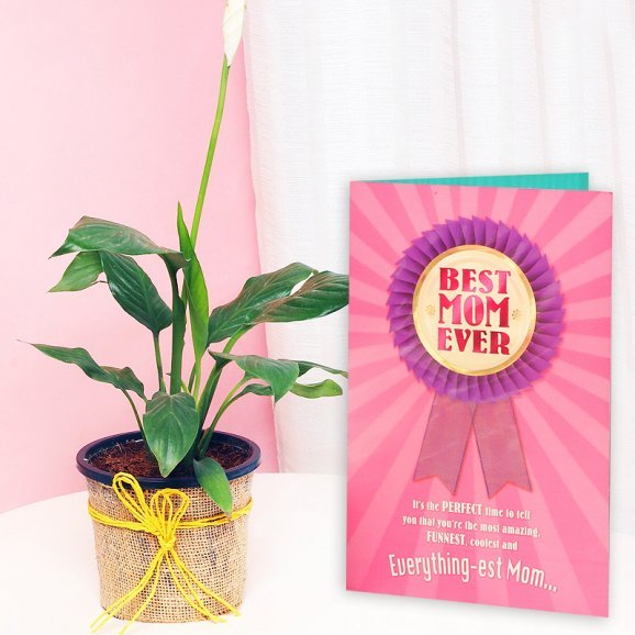 Peace Lily Plant and a Card Combo for Mom