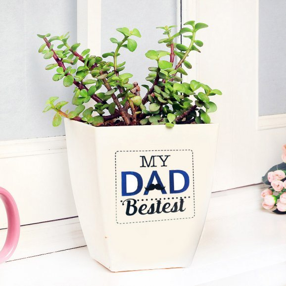 Jade Plant in White Vase for Dad