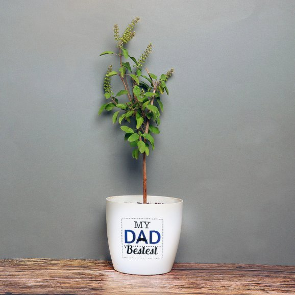 Tulsi Plant in White Vase for Daddy